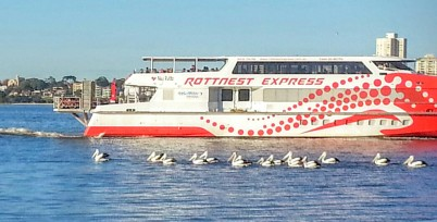 Pelican ferry